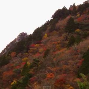 御在所岳の紅葉
