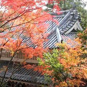 医王山油山寺の紅葉