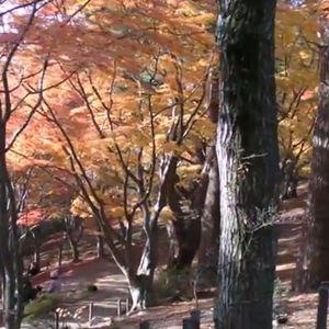 修善寺虹の郷の紅葉