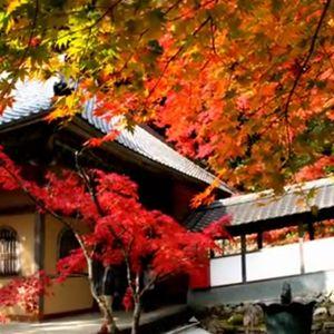 滋賀県永源寺の紅葉