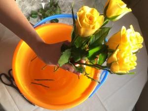 黄色バラ5本